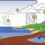 sự tuần hoàn của nước trên trái đất